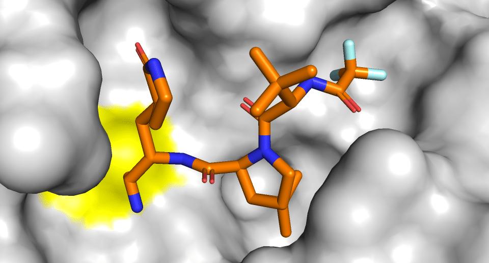 PF-07321332 imaginary binding mode