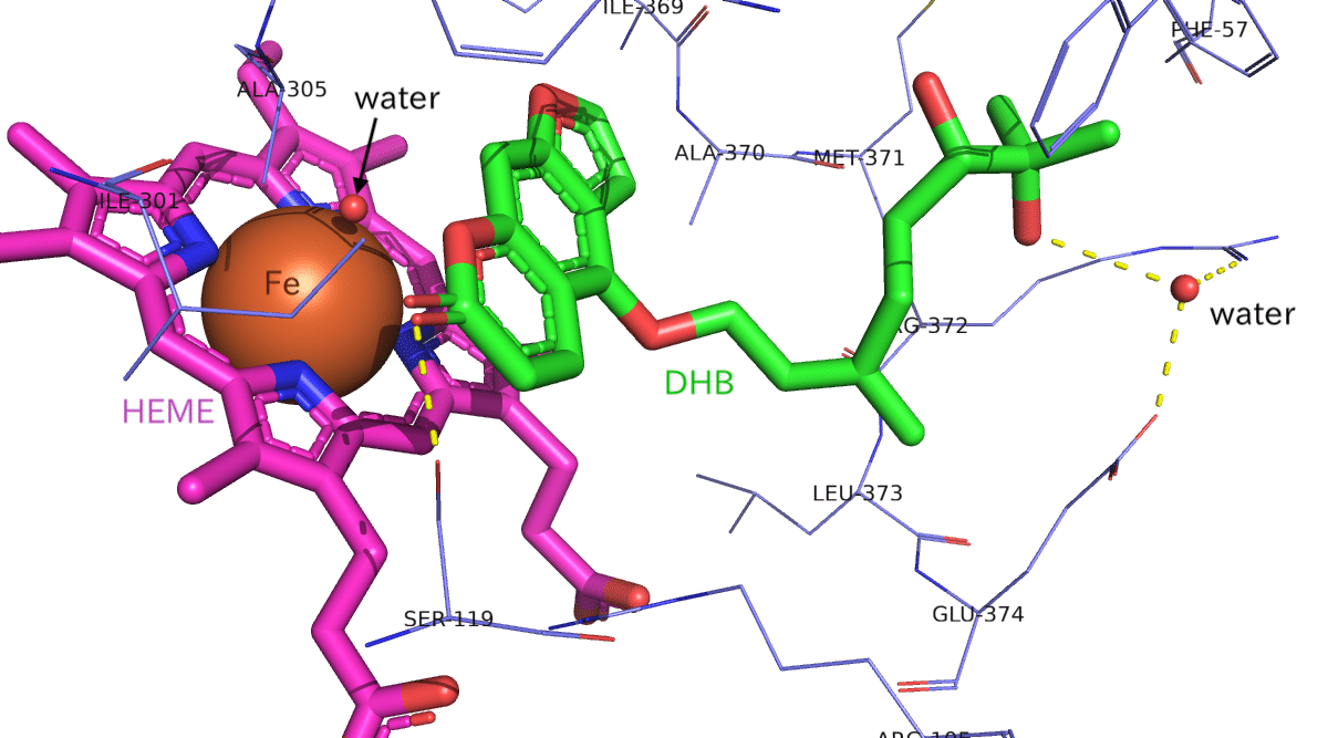 CYP3A4-DHB_bindingsite